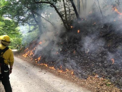 Conservation, Restoration and Biology Controlled Burn