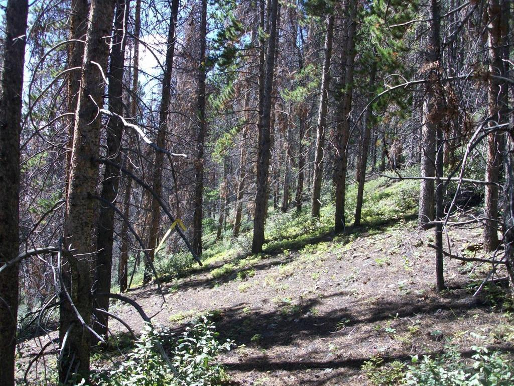 Figure 1 Example of a section of new trail through an area with sufficient openings.