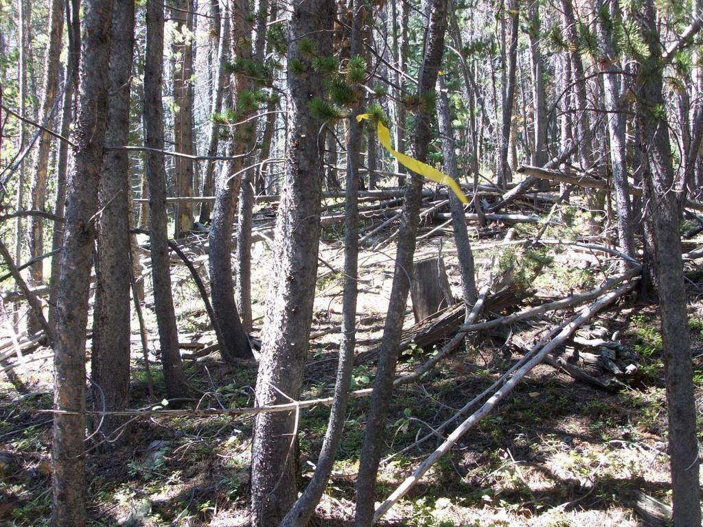 Figure 6 Example of a section of new trail where some tree cutting may be necessary.