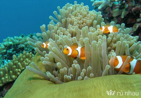 Attractions in Nha Trang bay High biodiversity 1 st, biggest, and most diverse coral reef MPA in Vietnam (Over 350 of