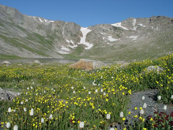 ! JULY 2013 Wildflower Hike Recommendations In keeping with the priorities established by