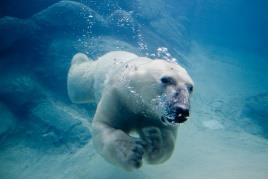 5 hour sessions) Swim checks required Difficulty 4 Swimming Small Boat Sailing Polar Bear Award BSA Mile Swim