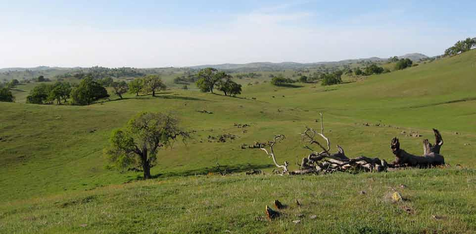 The Double Bar Z Ranch is a spectacular working cattle ranch. It has been run in western ranching traditions for generations dating back to the 1800 s.