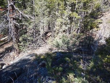 down into the treed hillside from the top of a rocky outcrop (B).