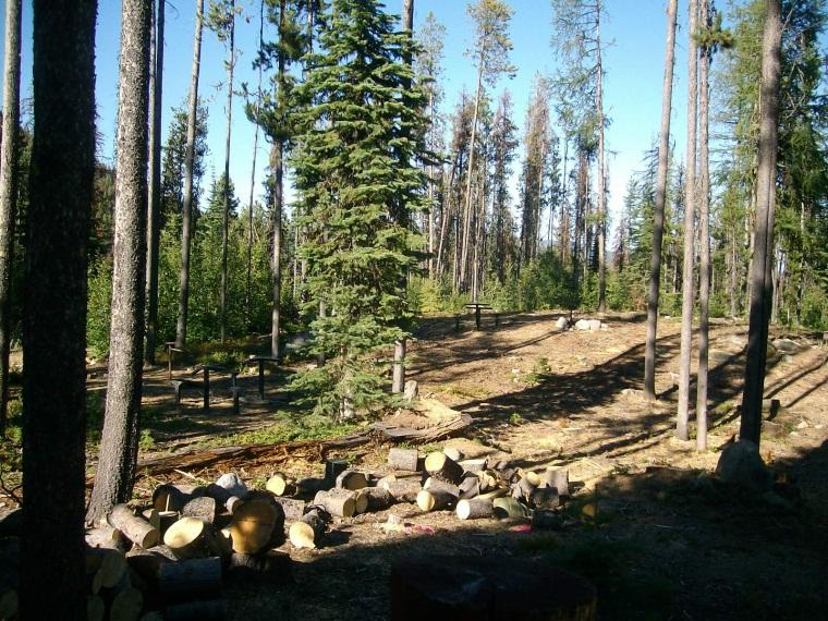 infected with the mountain pine beetle and heavy mortality with extensive hazard tree removal has already occurred at the site over the past two years.