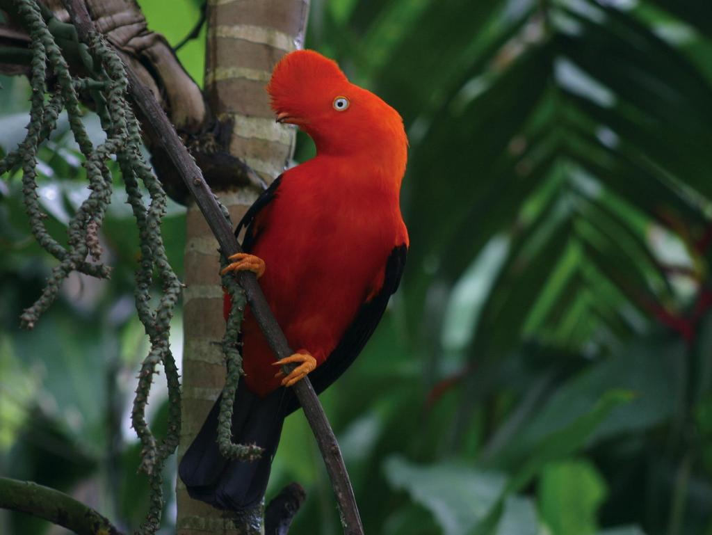 Bird species registered within Inkaterra areas 93% of Costa Rica s total bird