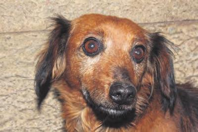 in Pomona The little dog needs a warm home This is a lively and adorable